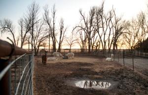 20130119_Heartland_Farm_Great_Bend_Kansas_02